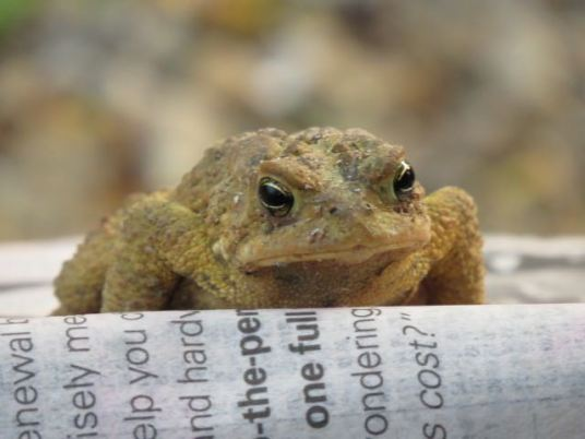 grtoad
