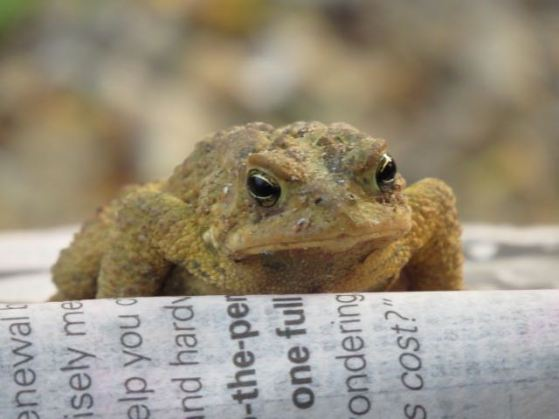 A visitor at my Riverview Park campsite catches up on his reading.