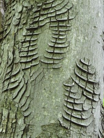 Not sure what caused this in the bark of a maple tree at Baker Road Park.